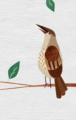 Birdsong teded 01